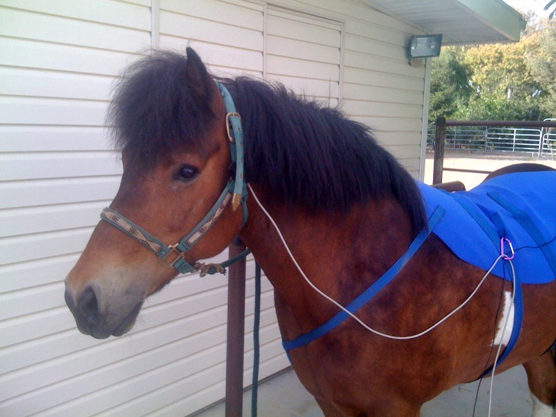 Blue Ribbon Horse Blanket BRAB
